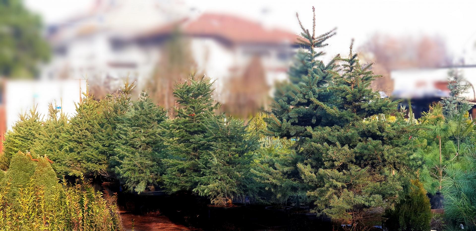 Коледни дръвчета и украса
