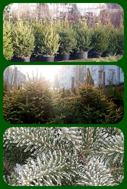 Цени- Коледни дръвчета