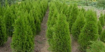 Услуги - Продажба на растения